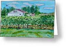 Vineyard Of Ontario 2 Greeting Card