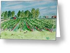 Vineyard Of Ontario Canada 1 Greeting Card