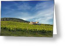 Vineyard On Sunny Hill Greeting Card