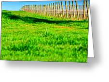 Vineyard Path 22628 Greeting Card