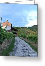 Vineyard Path Greeting Card by Sarah Christian