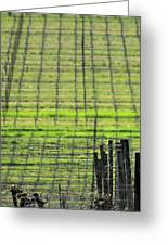 Vineyard Poles 23051 2 Greeting Card