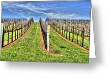 Vineyard Bodega Bay Greeting Card