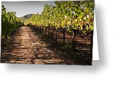 Vineyard Soil Of Sonoma Greeting Card