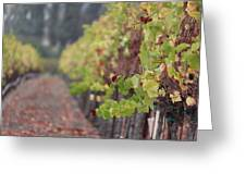 Vineyard View Greeting Card