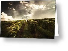 Vineyard Wanderlust Greeting Card
