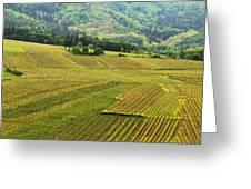 Vineyards Below Zellenberg France 1 Greeting Card