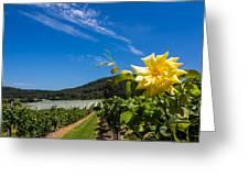 Vineyard's Companion Rose Greeting Card