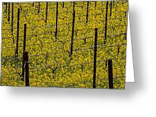 Vineyards Full Of Mustard Grass Greeting Card