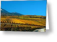 Vineyards In Autumn, Valais Canton Greeting Card