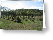 Vineyards In Va - 121251 Greeting Card by DC Photographer