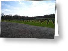 Vineyards In Va - 121267 Greeting Card