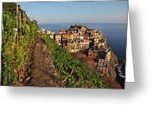 Vineyards Of Manarola Greeting Card