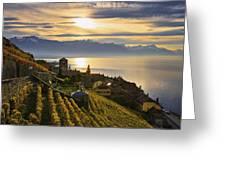 Vineyards Saint-saphorin, Lavaux Greeting Card