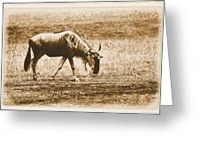 Vintage African Safari Wildbeest Greeting Card