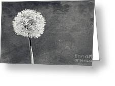 Vintage Allium Flower Greeting Card
