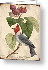 Vintage Bird Study-d Greeting Card
