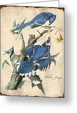 Vintage Bird Study-f Greeting Card
