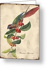 Vintage Bird Study-h Greeting Card