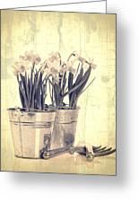 Vintage Daffodils Greeting Card