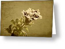 Vintage Double Petunia Greeting Card