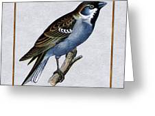 Vintage English Sparrow Square Greeting Card
