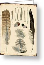 Vintage Feather Study-a Greeting Card