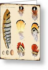Vintage Feather Study-d Greeting Card