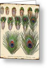 Vintage Feather Study-jp2084 Greeting Card