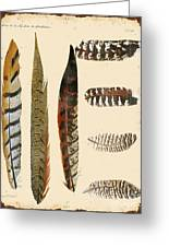 Vintage Feather Study-jp2085 Greeting Card