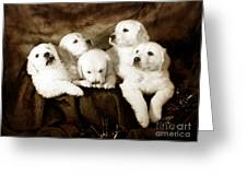 Vintage Festive Puppies Greeting Card
