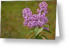 Vintage Lilac Bush Greeting Card