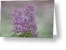 Vintage Lilacs Greeting Card