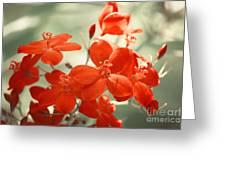 Vintage Red Flowers Greeting Card