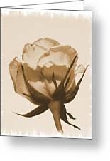Vintage Rose 2013 Greeting Card