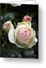 Vintage Rose Greeting Card