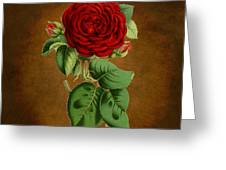 Vintage Rose Reflections Greeting Card