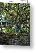 Vintage Schwinn And Ancient Live Oak Greeting Card