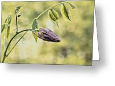 Vintage Wisteria Greeting Card