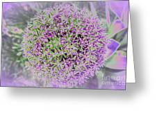 Violet And Green Greeting Card