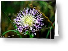 Violet And Yellow Flower Greeting Card