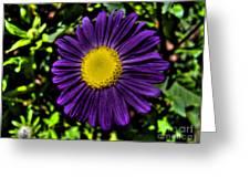 Violet Aster Greeting Card