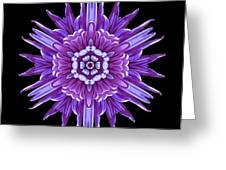 Violet Chrysanthemum Iv Flower Mandala Greeting Card