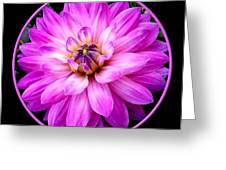 Violet Dahlia Greeting Card