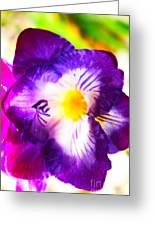 Violet Day Greeting Card by Rebecca Christine Cardenas