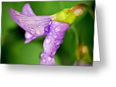 Violet Drops Greeting Card