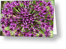 Violet Fireworks Greeting Card