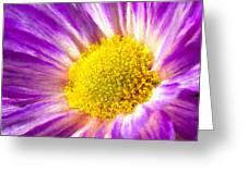 Violet Flower Macro Greeting Card