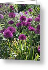Violet Flowerbed Greeting Card