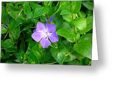 Violet Herbaceous Periwinkle Greeting Card